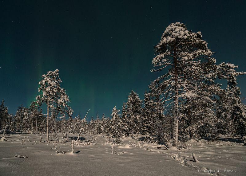 кольский, заполярье, север, ночь, зима, лес, Зима в лунном свете.photo preview