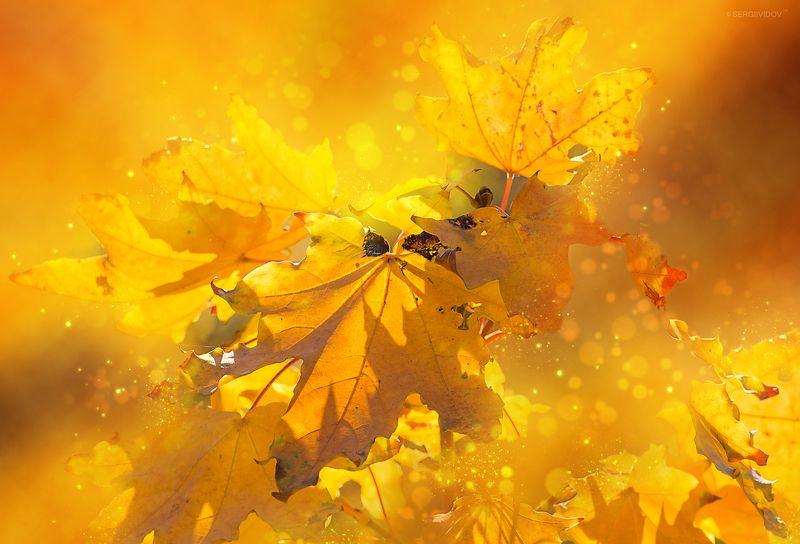 осень, природа, листья Золотая осеньphoto preview