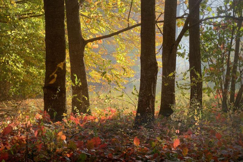 осень рассвет лес листва Осеннее утроphoto preview