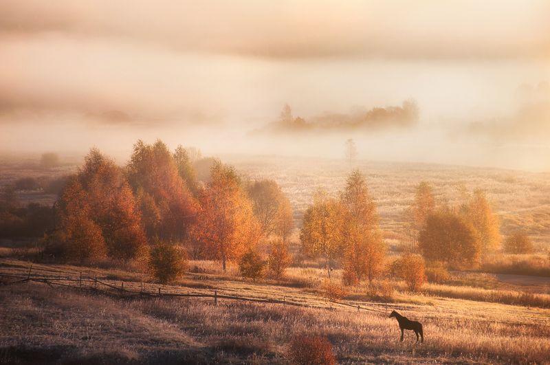 осень, природа, пейзаж, солнце, туман, лошадь, рассвет, утро, autumn, nature, landscape, sun, fog, horse, dawn, morning Осеннее утроphoto preview