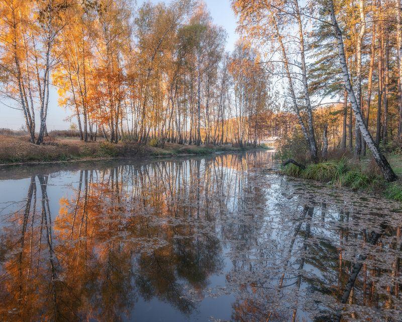 природа, пейзаж, landscape, осень, золотая осень Золотая осень в Подмосковьеphoto preview