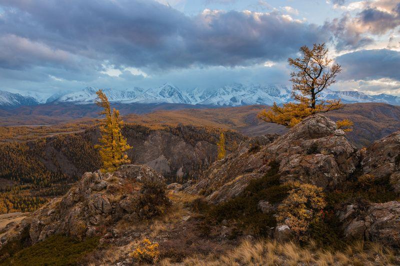 алтай, курай, северо-чуйский хребет, горы, закат, осень, дерево Ожидание первого снегаphoto preview