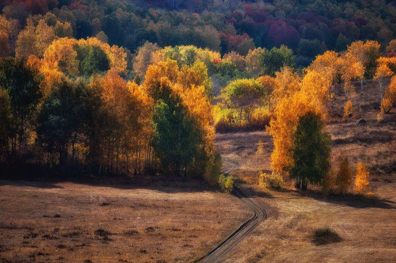 Дорога в осенний лесphoto preview