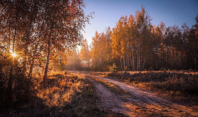 Разгуливает осеньphoto preview