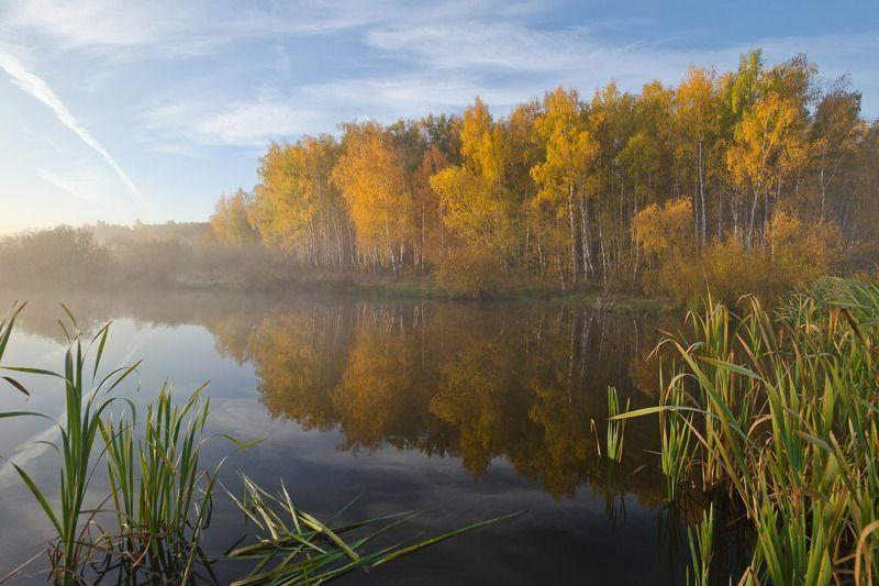 осень, природа, пейзаж, архангельское Во власти осениphoto preview