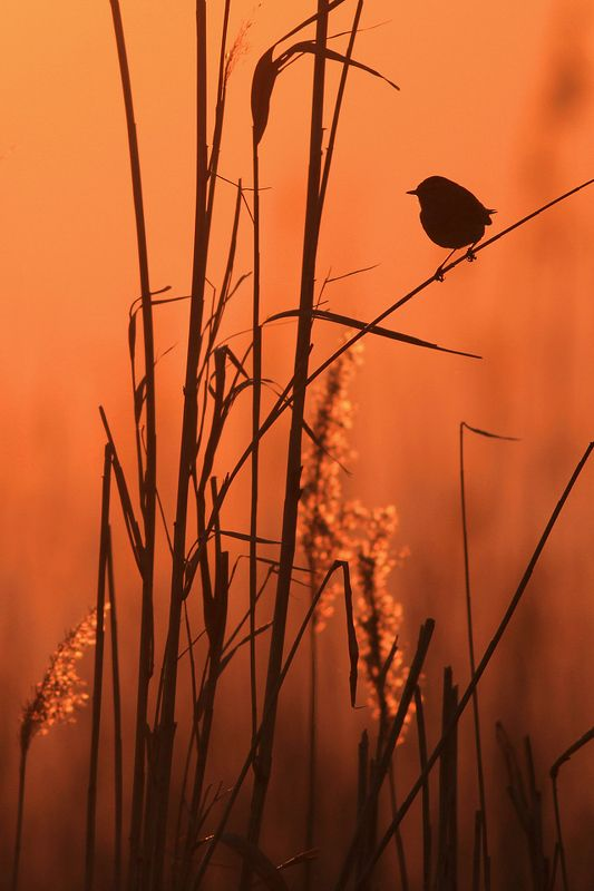 bird,orange,sunset,wildlife,nature,color,beautiful,scene,scenery,wild,beauty,birds,natural,sun,light Sunk in Amberphoto preview