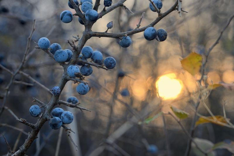 осень рассвет лес листва терен Осенний рассветphoto preview