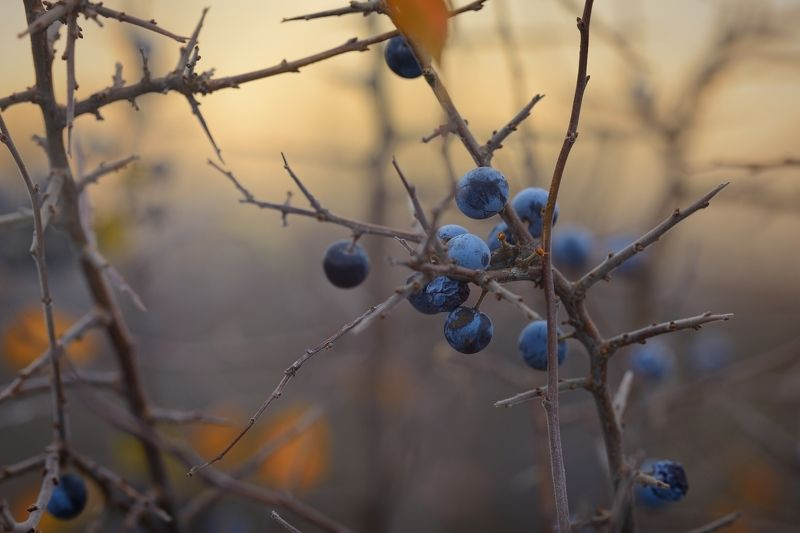 осень рассвет лес листва терен Дикий теренphoto preview
