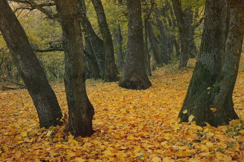 осень лес деревья листья Осенний коверphoto preview