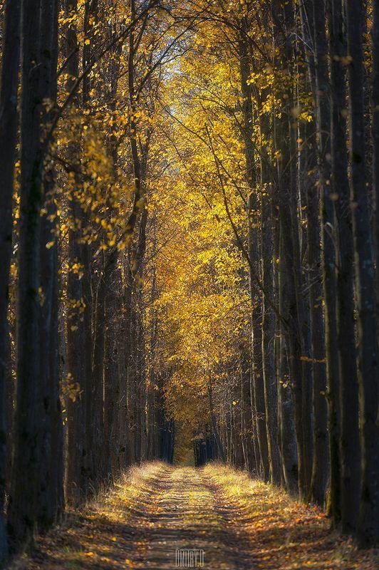 осень, пейзаж, аллея, Аллеяphoto preview