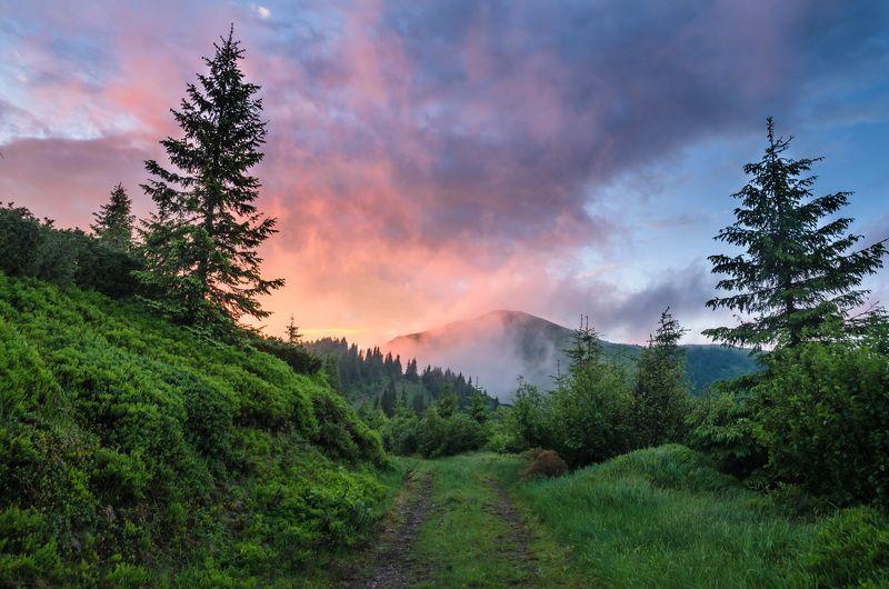карпаты, горы, лето, вечер, облака, красиво, июнь, мармаросы, лес, деревья, путешествие, небо, закат. Красочный закат после дождяphoto preview
