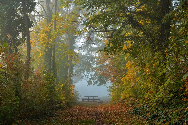 autumn end garden fall magic mist trees ogrod dranikowski colours table dranikowski jesien path End of the gardenphoto preview