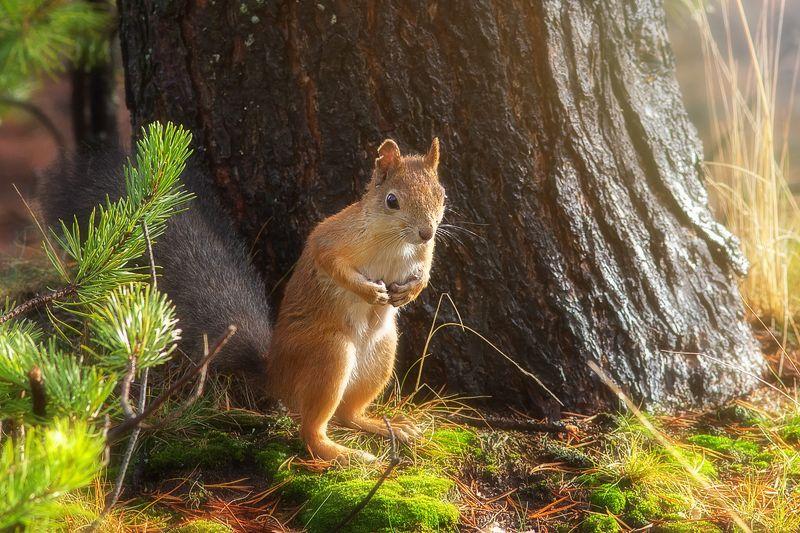 белка,белки,осень,север,природа,коми,животные Просто белкаphoto preview