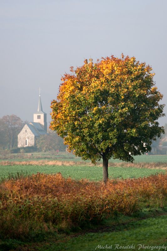 autumn; tree; fall; church; mood, misty Autumn - why is it this way?...photo preview