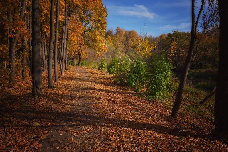 лес, природа, пейзаж, осень, подмосковье Подмосковная осеньphoto preview