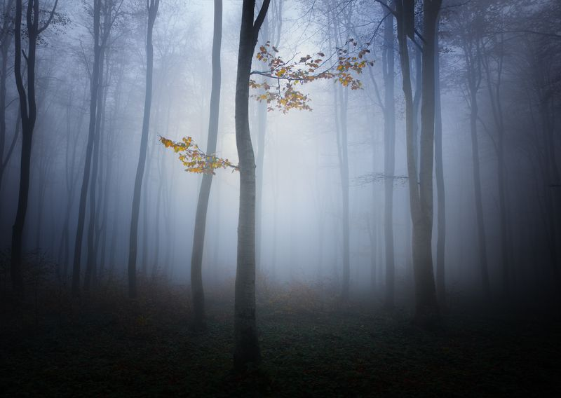 Заколдованный лес 2photo preview