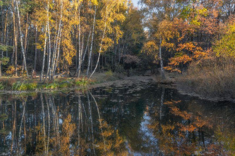 золотая осень, природа, пейзаж, отражение, landscape, autumn Волшебная осеньphoto preview