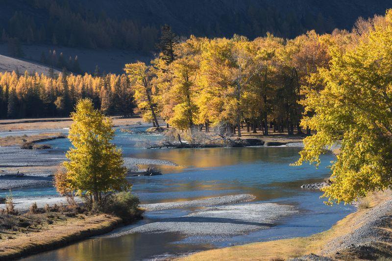 алтай, река, осень, россия Золото Алтаяphoto preview