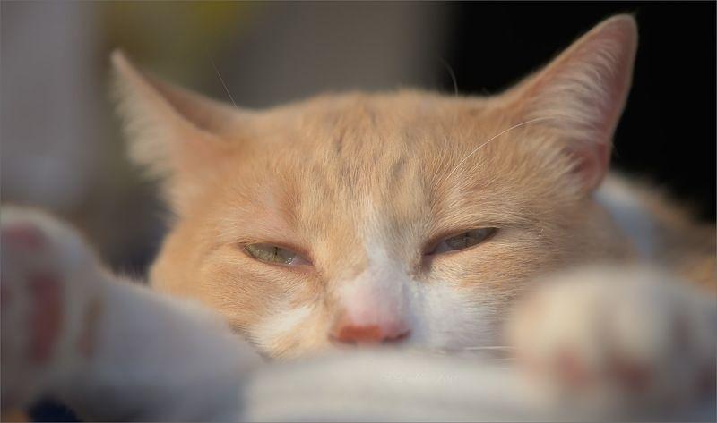 кот, осень, сон, глаза Осеньphoto preview
