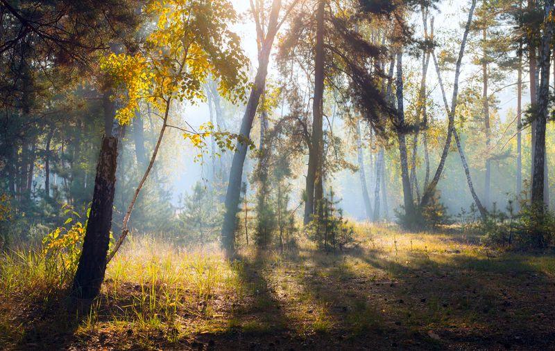 осень, октябрь, лес, свет, утро, рассвет, дымка, туман, собака Всё холодней становится рассветphoto preview