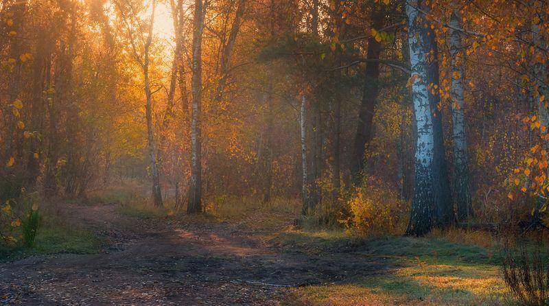 осень, октябрь, лес, свет, утро, рассвет, дымка, туман Длиннее ночи, холодней рассветphoto preview