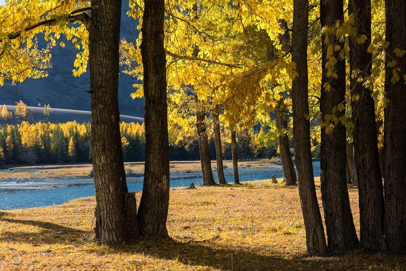 алтай, чуя, река, осень Осенние краскиphoto preview