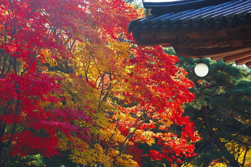 Autumn Templephoto preview