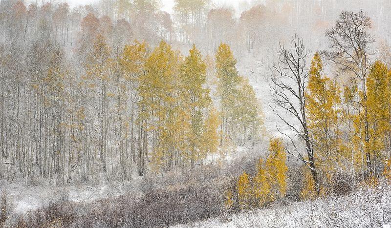 Snowy fallphoto preview