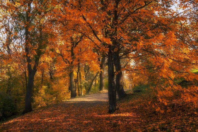 парк, ботанический, осень, октябрь Великолепие октябрьских аллейphoto preview