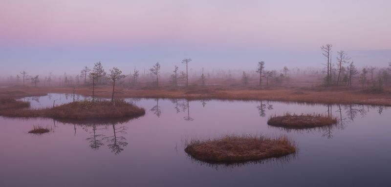 природа ленинградской области, ленобласть, болото, соколий мох, болотный тур \