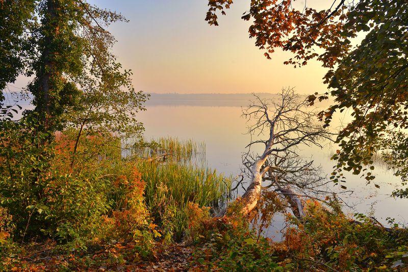autumn morning lake tree dranikowski silence water fall jesien fallen Autumn morning by the lakephoto preview