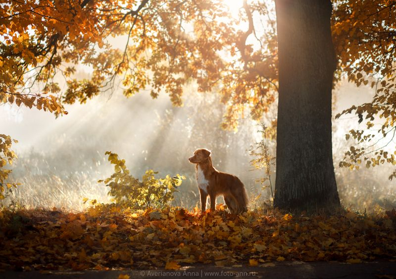 собака, природа, утро утроphoto preview