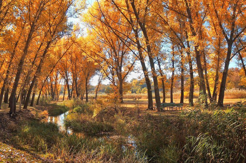 Осенний миг.photo preview
