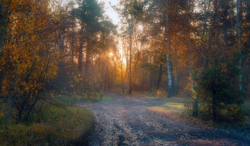 осень, октябрь, лес, свет, утро, рассвет, дымка, туман В ожиданье теплаphoto preview