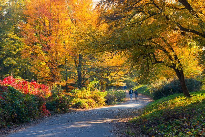 осень, октябрь, парк В цветастом великолепиеphoto preview