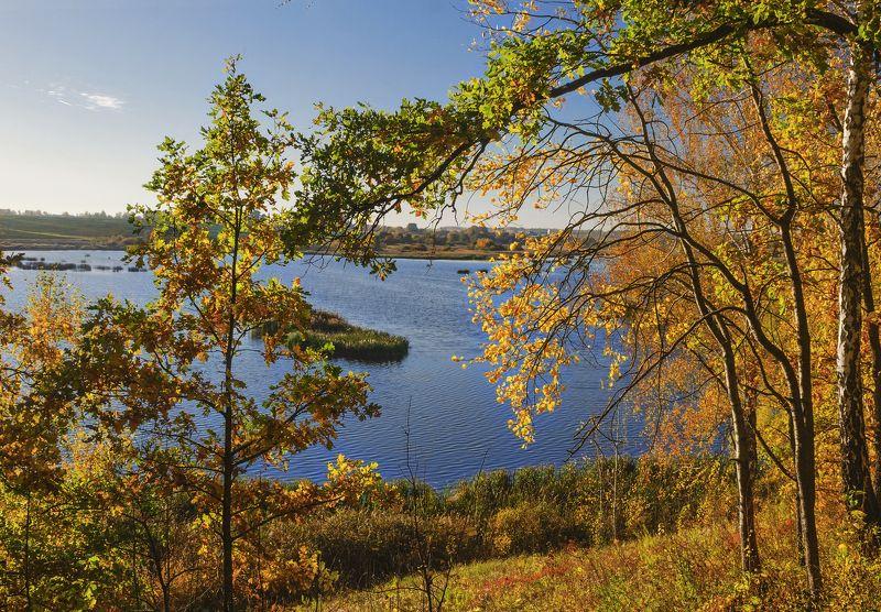 nevant60, пейзаж, красота, лес, осень Золотая осень на озере Госомаphoto preview
