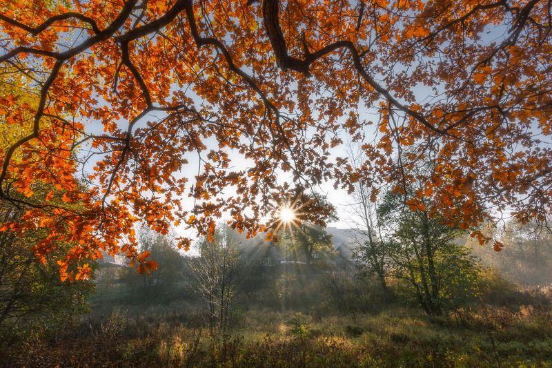 осень, пейзаж, рассвет, листья Яркая осеньphoto preview