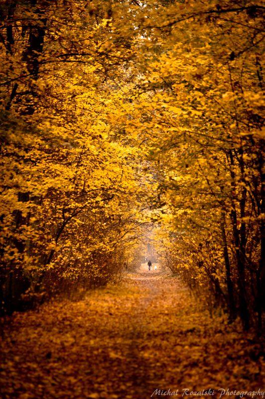 autumn Walking down the autumn alley...photo preview