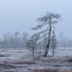 Осень на болоте.