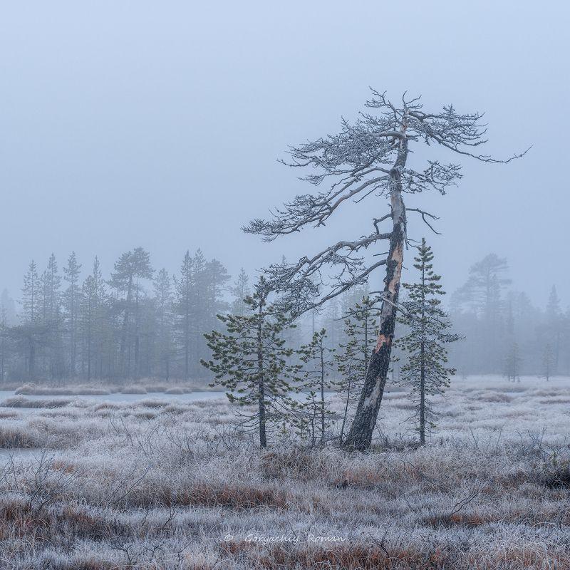 север, кольский, хибины, заполярье, осень, вечер, заморозки, Осень на болоте.photo preview