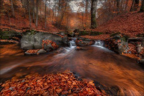 Круговорот листвы в природе ..