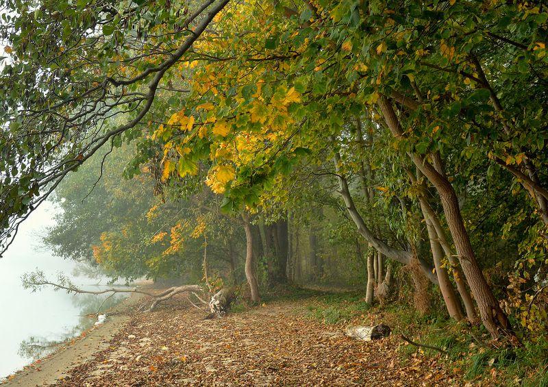 walk lake park garden foggy morning mist magic dranikowski trees autumn fall walk by the lakephoto preview
