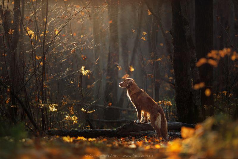 собака, природа photo preview