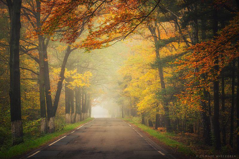 autumn, colours, silesia, poland, road, trees, landscape, fog, mist, silence, amazing, awesome, travel Autumn roadphoto preview