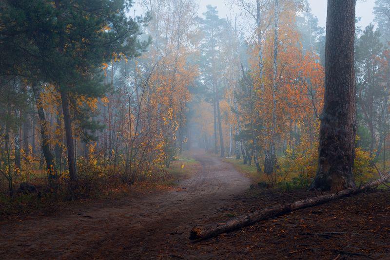 лес, осень, октябрь, утро, рассвет, туман Туманы осени блуждали по дорогамphoto preview