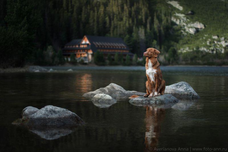 собака, озеро, горы photo preview