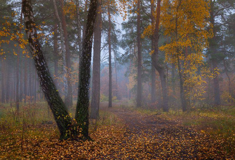 осень, октябрь, лес, , утро, туман Здесь замерли секунды и минутыphoto preview