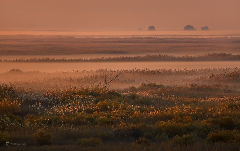 pentax645z, pentax, астраханская область, волга, дельта, река, отражение, облака, берег, ивы, деревья, рассвет, осень, путешествие, заповедник, астраханский государственный биосферный заповедник, туман, тростник, орлан, Осенняя фотоэкспедиция по Астраханскому заповедникуphoto preview
