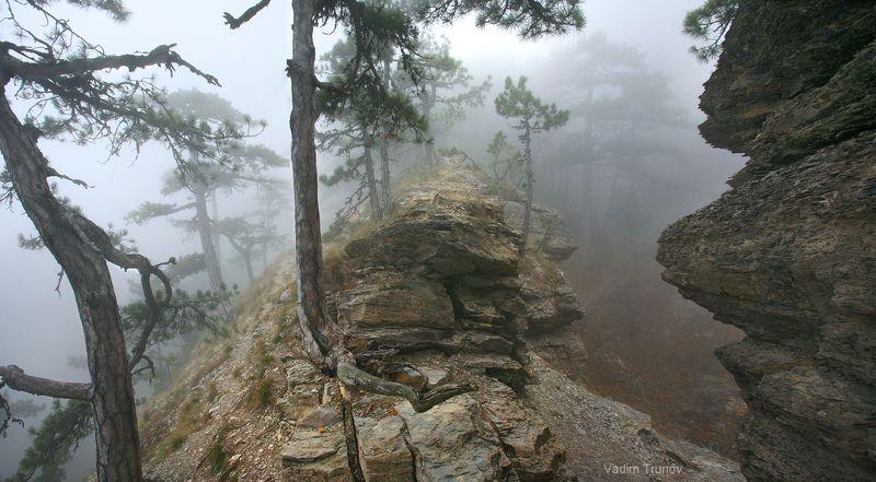 Туманный лес мглистых горphoto preview