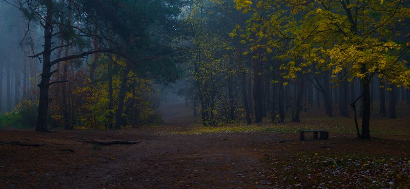 лес, осень, октябрь, утро, сумерки, туман Сизые сумеркиphoto preview